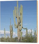 Saguaros With Green Grass Wood Print