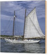 Sailboat In Cape May Channel Wood Print