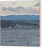 Sailing Lake Taupo Wood Print