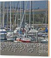 Sailing Sailing Wood Print
