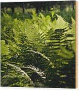Sailing The Fern Sea Wood Print