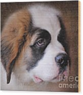 Saint Bernard Puppy Wood Print by Jai Johnson