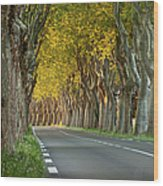 Saint Remy Trees Wood Print