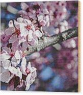 Sakura Blossoms Wood Print by Anthony Citro