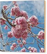 Sakura Tree Blossoms Wood Print
