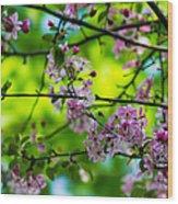 Sakura Tree In Bloom - Featured 3 Wood Print