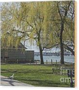 Salem Willow Trees Wood Print
