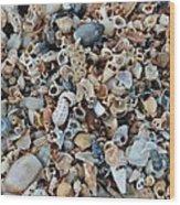 Sallie's Sea Shells Wood Print