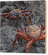 Sally Light Foot Crabs Galapagos Wood Print