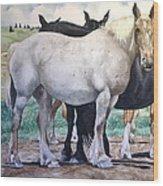 Sally's Horses Wood Print