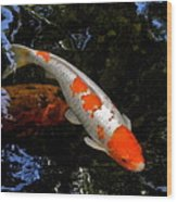 Salmon And White Koi Wood Print