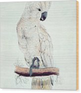 Salmon Crested Cockatoo Wood Print