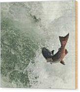 Salmon Run 2 Wood Print by Mamie Gunning