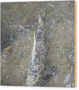 Salmon Spawning Wood Print
