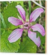 Salmonberry  On Trail To Wapta Falls In Yoho Np-bc  Wood Print