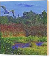Salt Marsh Gull Wood Print
