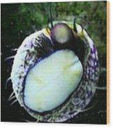 Saltwater Bearded Snail Wood Print