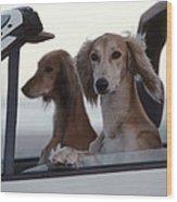 Saluki Dogs In Car Wood Print