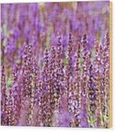Salvia Abstract Wood Print