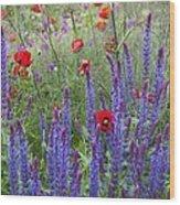 Salvia Sp. And Papaver Sp Wood Print