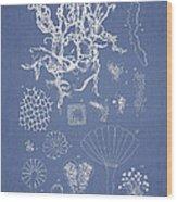 Salwater Algae Wood Print