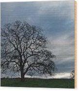 Same Tree Many Skies 10 Wood Print