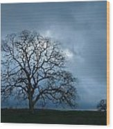 Same Tree Many Skies 14 Wood Print