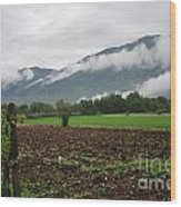 San Comino Valley Vines Wood Print