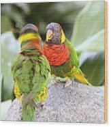 San Diego Zoo - 1212341 Wood Print