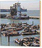 San Francisco Pier 39 Sea Lions 5d26102 Wood Print