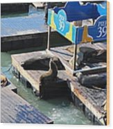 San Francisco Pier 39 Sea Lions 5d26105 Wood Print by Wingsdomain Art and Photography