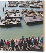 San Francisco Pier 39 Sea Lions 5d26111 Wood Print by Wingsdomain Art and Photography