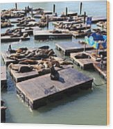 San Francisco Pier 39 Sea Lions 5d26115 Wood Print by Wingsdomain Art and Photography