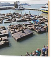 San Francisco Pier 39 Sea Lions 5d26116 Wood Print by Wingsdomain Art and Photography