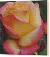 San Francisco Rose Garden Rose Wood Print