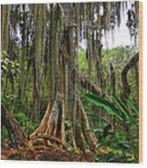 San Gil Wood Print