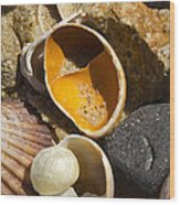Sand Covered Shells Wood Print by Eugene Bergeron