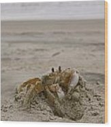 Sand Crab Wood Print by Nelson Watkins