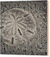 Sand Dollar 3 Black And White Botany Bay Wood Print