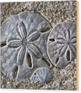 Sand Dollars 2106 Wood Print