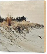 Sand Dunes At Penny Beach Wood Print