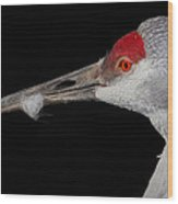 Sand Hill Crane Wood Print