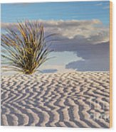 Sand Patterns And The Yucca Wood Print