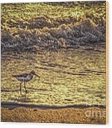 Sand Piper Wood Print by Marvin Spates
