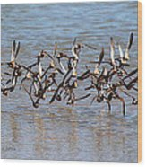 Sand Pipers Arrive At The Grp Wood Print