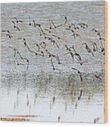 Sand Pipers In Flight Wood Print