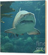 Sand Shark Wood Print