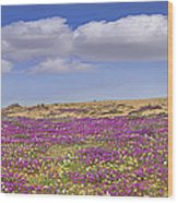 Sand Verbena On The Imperial Sand Dunes Wood Print