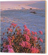 Sand Verbenas At Sunset White Sands National Monument Wood Print