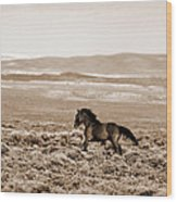 Sand Wash Mustang Wood Print
